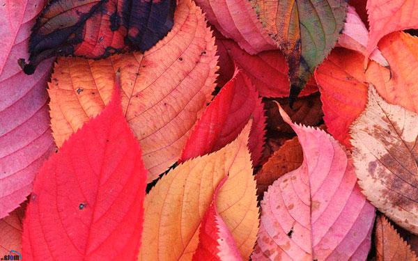 Лісце восеньскай асіны