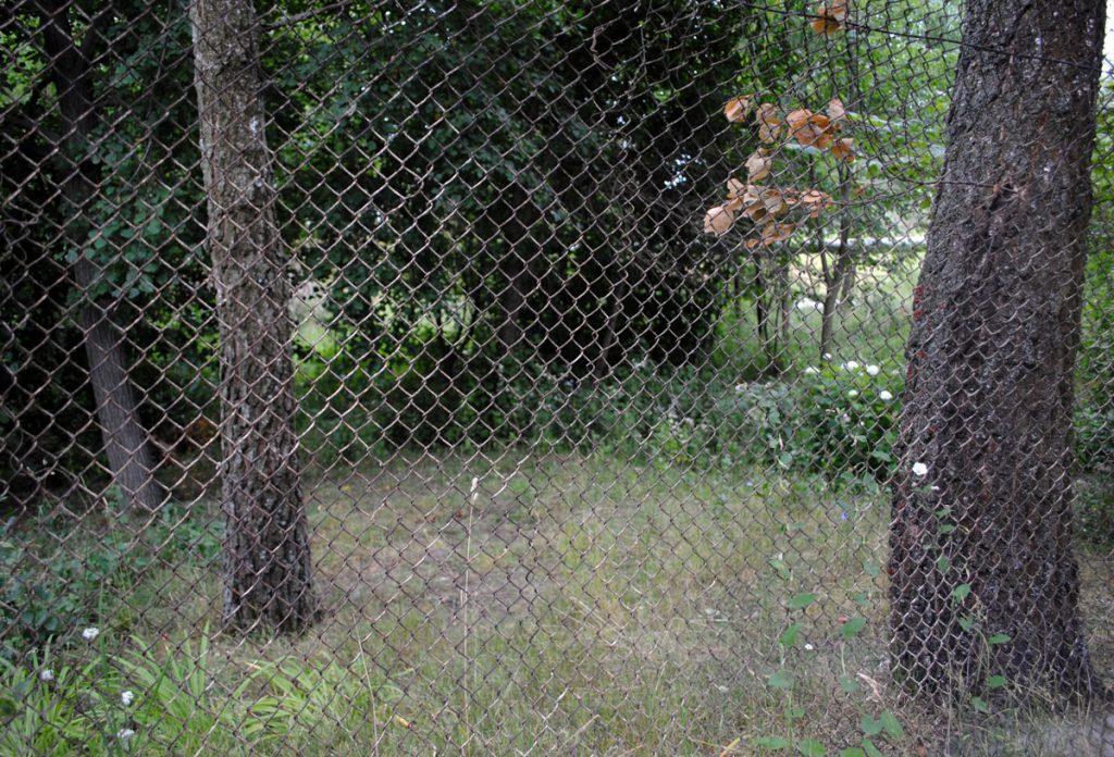 А гэта - невялічкі парк каля бацькоўскай хаты